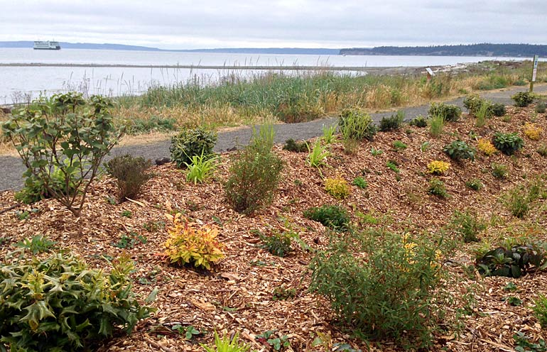 WSU, Port Collaborate on Point Hudson Rain Garden